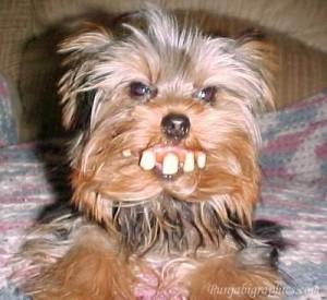 redneck-dog